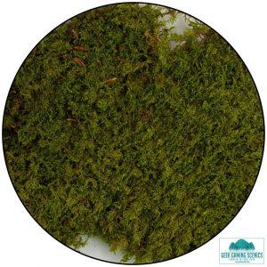 tree-canopy-tree-foliage-sheets-tree-foliage